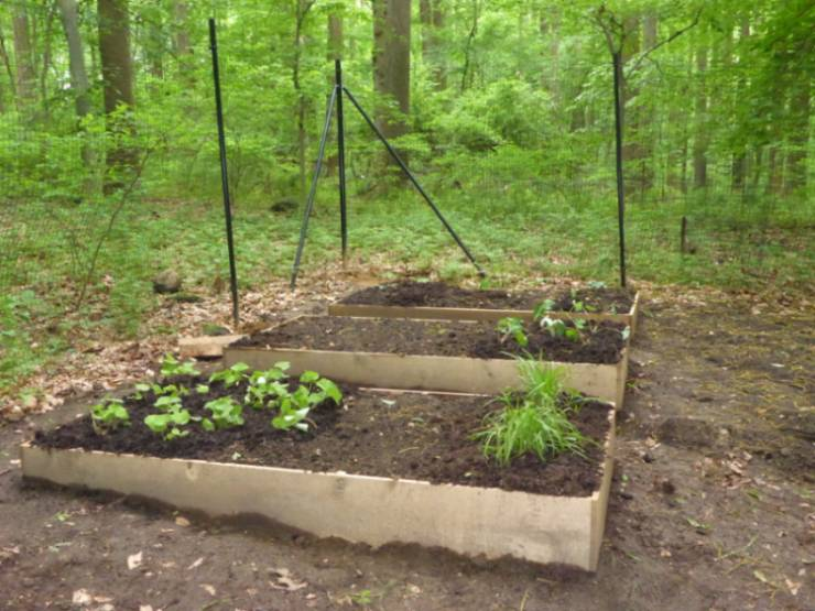 Three raised beds at the GNA Native Plant Nursery