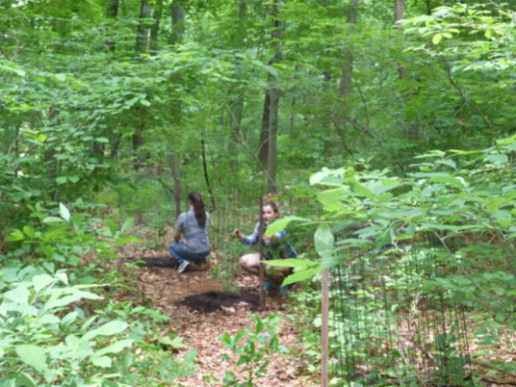 Summer Interns Alex and Katie planting trees in the GNA (2017).