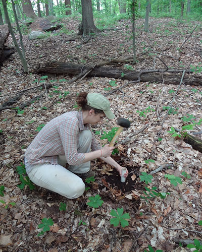Graduate student Dana Charitonchick collecting soils for a seed bank study
