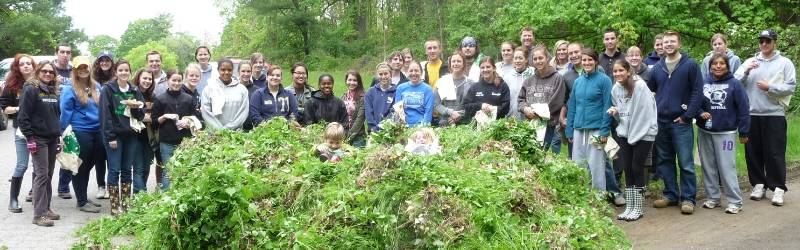 Invasive Species Management: WCU teachers, staff, and students participating in the annual 'Garlic Mustard Pull'